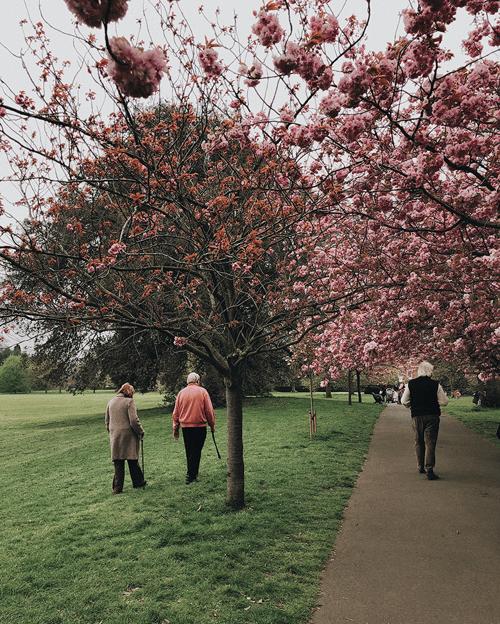 Personnes âgées se promenant à l'extérieur dans un parc